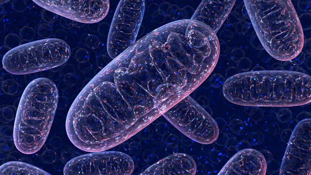 Mitochondria i bakterie jelitowe OMNi-BiOTiC